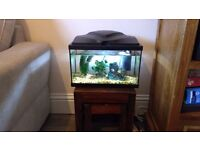 20 litre Aquarium with fish and plants for sale