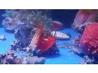 Marine Fish Coral Zoas mushroom