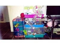 hamster cage with all accessories, wheel and ball