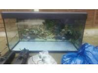 Fluval roma 200 tropical fish tank