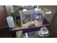 Russian dwarf hamster & cage