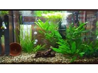 Tropical fish tank with cabinet, fish and other maintenance equipment