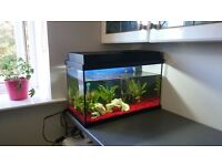 Fish tank complete with filter, light and deco