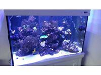 Aquaone aqua reef 300 Marine Aquarium Tank white + Sump + accesories