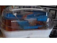 Full hamster set up including ball