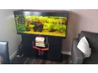 Jewel rio 240 full setup