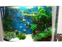 Complete Aquascaped fish tank aquarium and Amazon fish setup