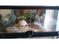 Leopard Gecko including vivarium, ornaments and heat mat