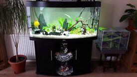 Juwel vision 260 fish tank