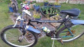 bargain halfords carrera 18 inch frame mountain bike