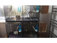 Budgies Joblot 8 Budgies + 2 Double Cages & Feeders
