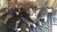 kittens - Free