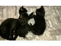 Adorable little kittens for sale