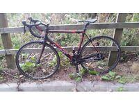wilier-it triestina road bike