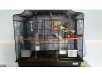 Male and Female Budgies & Cage for sale