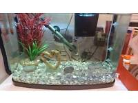 40litre Fish tank complete setup and fish