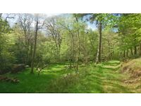 4.75 Acre Woodland Near Cheriton Bishop, Exeter, Beautiful, Secluded, peaceful