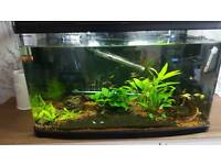 Tropical fish tank 160l selling all fish & accessories