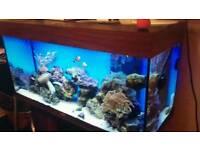 Marine Fish tank aquraim