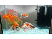 Aquariom glass with 5 fishes