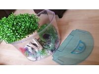 """Frozen"" 30 litre fish tank and accessories. £10"