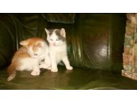 3 kittens for sale 40 pounds each. PHONE 02879401173