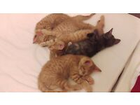 Five playful and cute kittens for sale