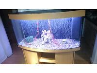 4FT JUWEL VISION 260 LITER BOW FRONTED FISH TANK FOR SALE,,FULL SET UP,,
