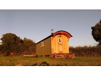Shepherds Hut Holiday Accommadation and Camping
