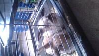 2 female bunny's and huge cage