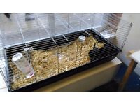 black velvet male rabbit with large indoor cage