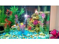 130l Recently Bought Fish Tank and Equipment for Sale