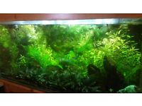 Plants for fish tank: hornwort, hygrophila, crypts, wisteria, java moss, elodea, tall grass