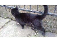 Lost black cat REWARD 07415506089