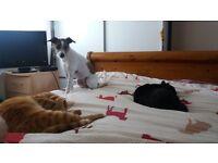 seeking pet friendly rental