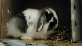 Female Rabbit and full set up