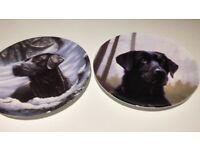 Labrador Decorative plates by wedgewood