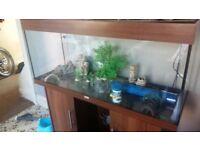 Fish tank 240ltr