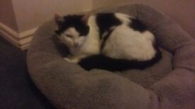 3 year old female cat called star needs new home.