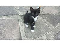 Playful Little kitten needs a new home