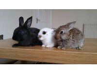 3 bunnies - 8 weeks old