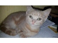 Cute Female Kitten in Need of a Good Home