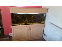 4ft Tropical Fish Tank