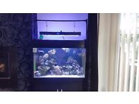 Marine fish tank 350litre immaculate condition