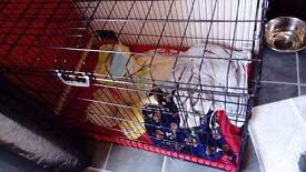 """xl dog cage crate, 42 x 21 x 39"""" great condition"""