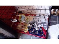 "xl dog cage crate, 42 x 21 x 39"" great condition"