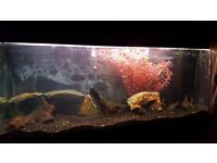 Fish tank 140l with black stand,heater,pump and light