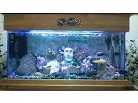 200 litre Lake Malawi Cichlid aquarium