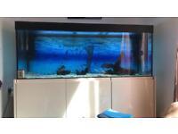 5 ft tropical fish tank