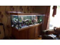 6x2 ft aquarium